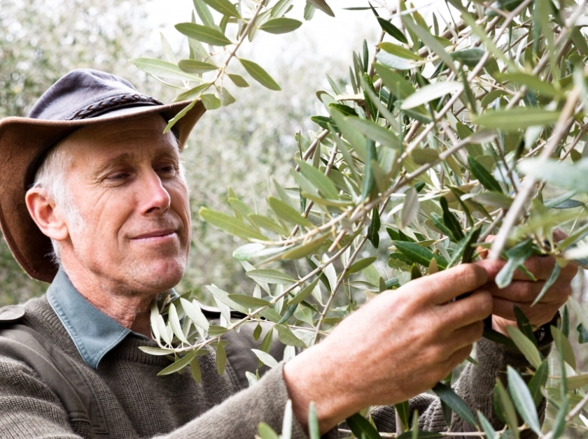 Image: Wollundry Grove Olives