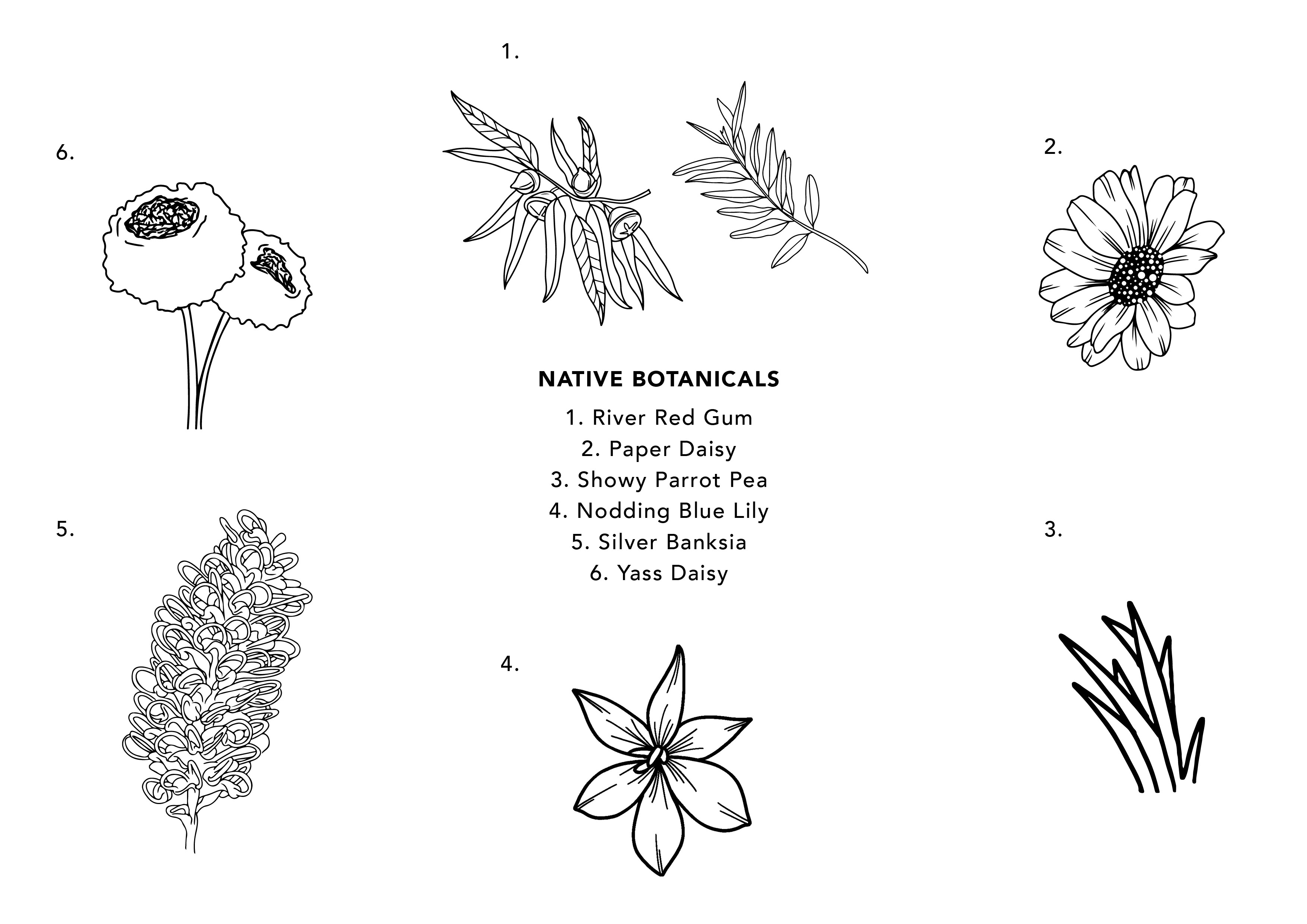 A description of each of the botanicals in the Wagga Wagga mindfulness colouring design