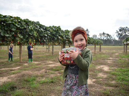 Bidgee Strawberries and Cream Tours
